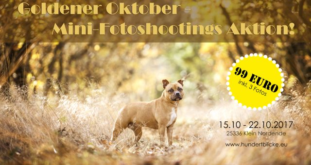 Aktion: Goldener Oktober